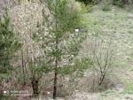Merzifon Kayadüzü Köyüde Kiralık Bahçe